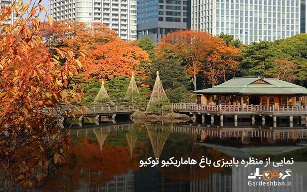 باغ هاماریکیو توکیو ؛مقصد محبوب گردشگر ها، عکس