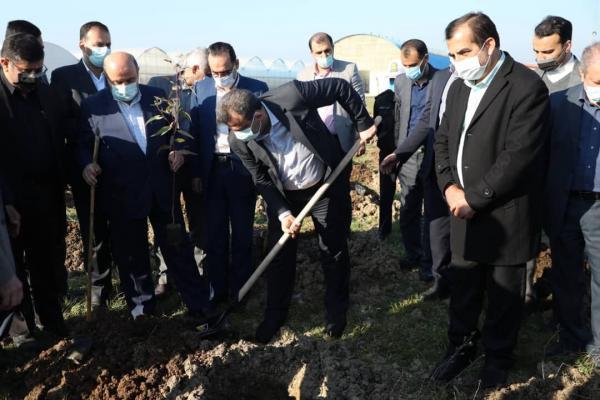 خبرنگاران عملیات زراعت چوب در چهارهزار هکتار از اراضی مازندران آغاز شد