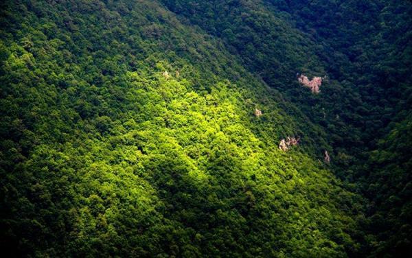 هر 20 ثانیه یک زمین فوتبال از جنگل های ایران تخریب می شود